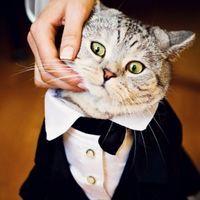 Свадебная судия 4You