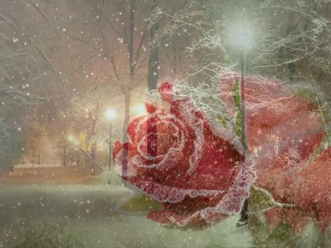 Белянский Илья - Shape Of My Heart (Sting)
